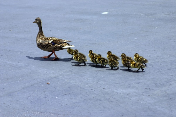 Imprinting on God like ducklings to a duck